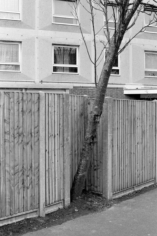 tree growing at an angle because of a domestic fence
