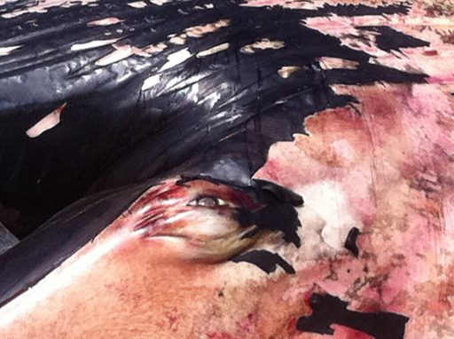 close up of beached whales skin