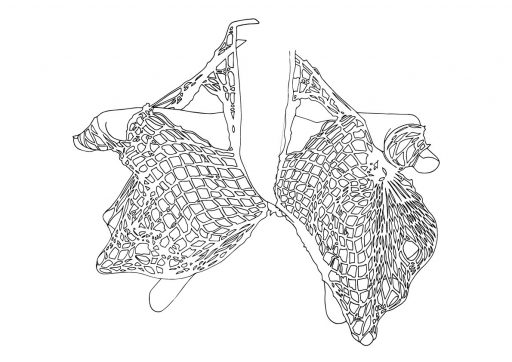line drawing of net